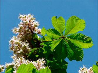 Arbusto planta romero